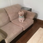 Richmond-Sofa-Pet-Stain-Cleaning